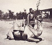 180px-anglo-egyptian_sudan_camel_soldier_of_the_british_army.jpg